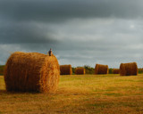 HARVEST by LANJOCKEY, Photography->Landscape gallery