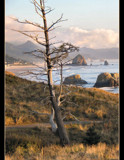 Sunbleached at Haystack Rock by verenabloo, Photography->Shorelines gallery