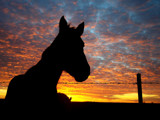 Makes good horse sense .... by 0930_23, Photography->Animals gallery
