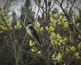 Birds # 44 by picardroe, photography->birds gallery