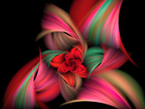 Christmas Rose by jswgpb, Abstract->Fractal gallery