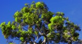 Keep a green tree . . . . by LynEve, photography->general gallery