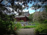 Garden. by picardroe, photography->gardens gallery