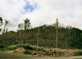 Storm Damage to Oregon Trees by verenabloo, Photography->Nature gallery