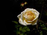 Teasing Georgia by bikolnon, Photography->Flowers gallery