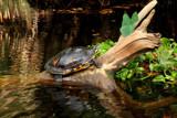 Turtle by Paul_Gerritsen, photography->reptiles/amphibians gallery
