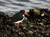 Red Eye by rvdb, photography->birds gallery