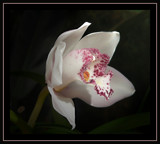 From Me by mimi, Photography->Flowers gallery