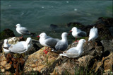 Happy Gulls by LynEve, photography->birds gallery