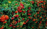 Super Hedge by braces, Photography->Gardens gallery