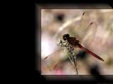 Red Dragon - Rework by Hottrockin, Rework gallery