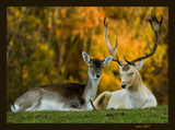Deer1 by wimgroen, Photography->Animals gallery