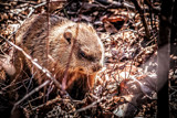 Groundhog Day All Over Again by Eubeen, photography->animals gallery