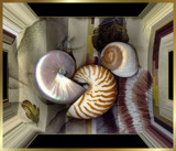 Seashell Pleasure by verenabloo, Photography->Manipulation gallery