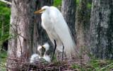 Nesting  28 by 100k_xle, Photography->Birds gallery