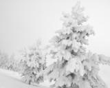 Megafrost by prisoner5307, photography->landscape gallery