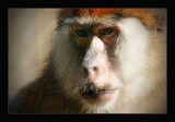 thoughtful by JQ, Photography->Animals gallery