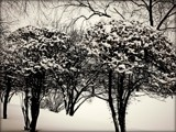 Snowy Day Again! by trixxie17, contests->b/w challenge gallery