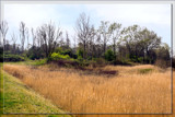 Marshy by corngrowth, photography->landscape gallery