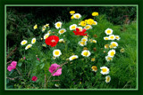 Summer Wildflowers 03 by corngrowth, Photography->Flowers gallery