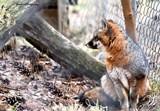 Malibu by tigger3, photography->animals gallery