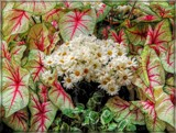 Natural Framing by trixxie17, photography->flowers gallery
