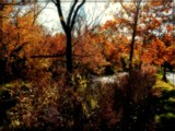 Fall Memory by trixxie17, photography->landscape gallery