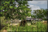 Sauder Village 9,  Down By The Old Mill Stream by Jimbobedsel, Photography->mills gallery