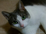 I Wear Eye-Liner by mesmerized, photography->pets gallery
