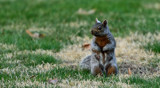 Squirrely Poise by tigger3, photography->animals gallery