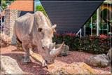 Rhino Welcome by corngrowth, photography->sculpture gallery