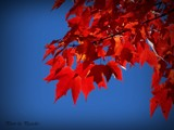 Red & Blue by picardroe, photography->nature gallery
