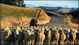 Country Road Block by LynEve, photography->animals gallery
