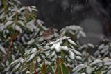 Snow Bird 2 by 427cobraAC, Photography->Birds gallery