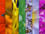 Macro rainbow by Samatar, Photography->Macro gallery