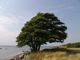 Tree of Serenity by Selpix, Photography->Shorelines gallery
