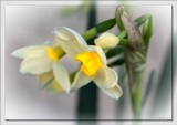 Hello Spring ! by LynEve, photography->flowers gallery