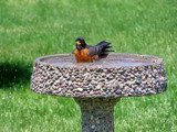 Oh Robin..Bath Time! by kidder, Photography->Birds gallery
