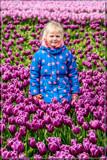 Zeeland Tulip Fields 4 by corngrowth, photography->flowers gallery