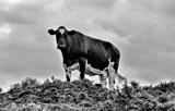 The Stare by JaiJoli, photography->animals gallery
