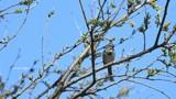 Bird Spotting by tigger3, photography->birds gallery