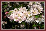 Kia Ora Lyn by corngrowth, Photography->Flowers gallery