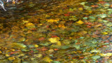 Riverbed color by ted3020, photography->water gallery