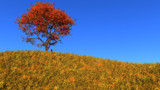 Clear Autumn Day by Akeraios, computer->landscape gallery