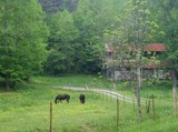 Horses in Pasture (Edited) by RickM, photography->animals gallery
