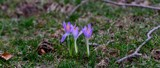 A Sure Sign Of Spring by tigger3, photography->flowers gallery