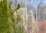 Defries Garden March 3rd. by tigger3, photography->gardens gallery