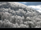 Treetops Glisten by breeze_lc, Photography->Landscape gallery