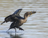 Jump for Joy by garrettparkinson, photography->birds gallery
