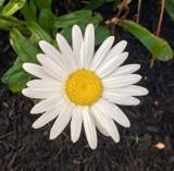 """Late Bloomer"" by BulldogsFan, photography->flowers gallery"